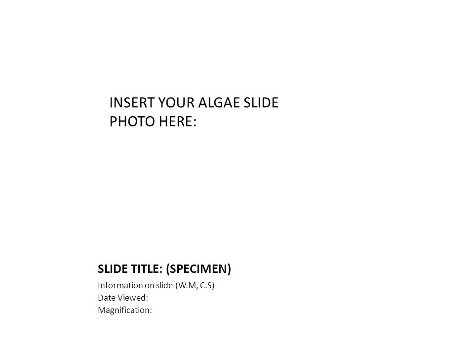 SLIDE TITLE: (SPECIMEN) Information on slide (W.M, C.S) Date Viewed: Magnification: INSERT YOUR ALGAE SLIDE PHOTO HERE: