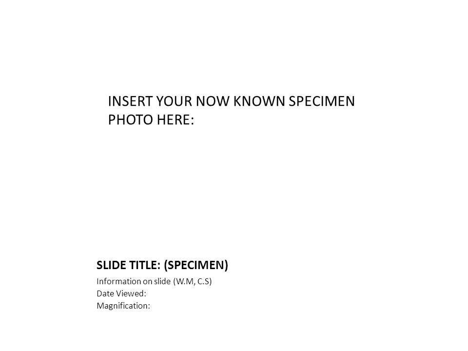 SLIDE TITLE: (SPECIMEN) Information on slide (W.M, C.S) Date Viewed: Magnification: INSERT YOUR NOW KNOWN SPECIMEN PHOTO HERE: