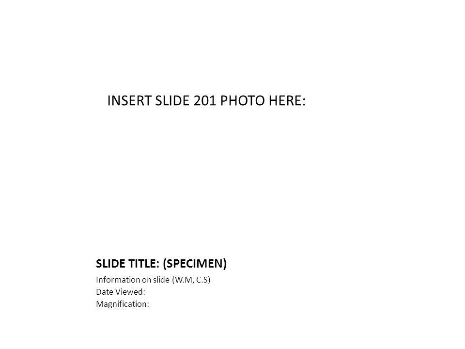 SLIDE TITLE: (SPECIMEN) Information on slide (W.M, C.S) Date Viewed: Magnification: INSERT SLIDE 201 PHOTO HERE: