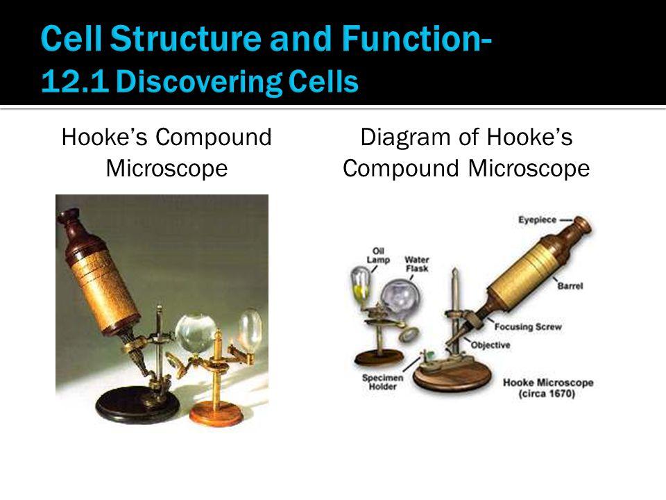 Hooke's Compound Microscope Diagram of Hooke's Compound Microscope