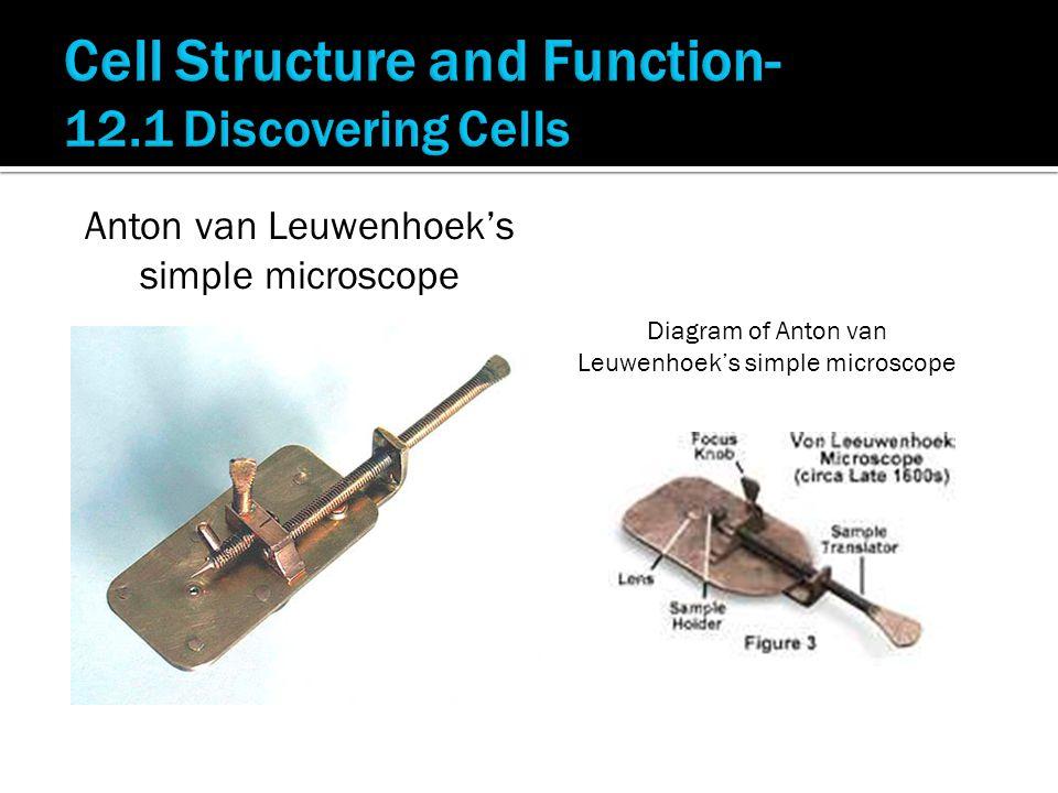 Anton van Leuwenhoek's simple microscope Diagram of Anton van Leuwenhoek's simple microscope