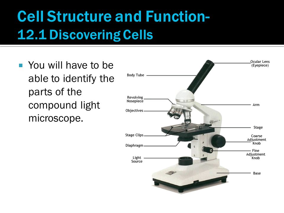  You will have to be able to identify the parts of the compound light microscope.