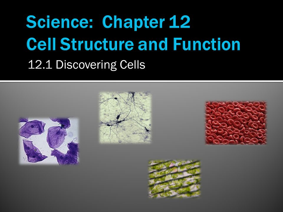 12.1 Discovering Cells