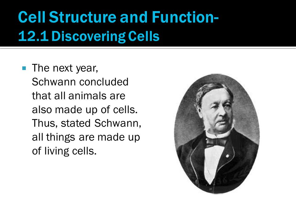  The next year, Schwann concluded that all animals are also made up of cells.