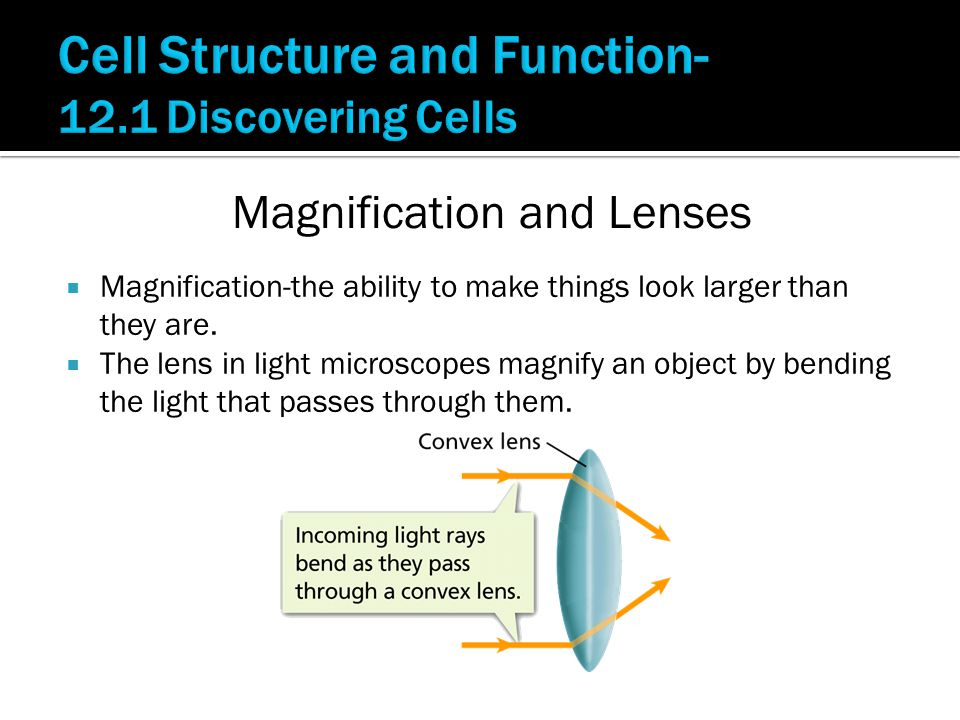  Magnification-the ability to make things look larger than they are.
