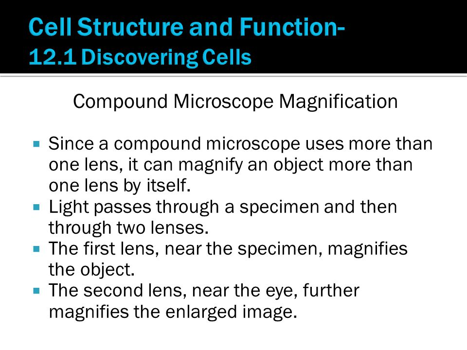  Since a compound microscope uses more than one lens, it can magnify an object more than one lens by itself.