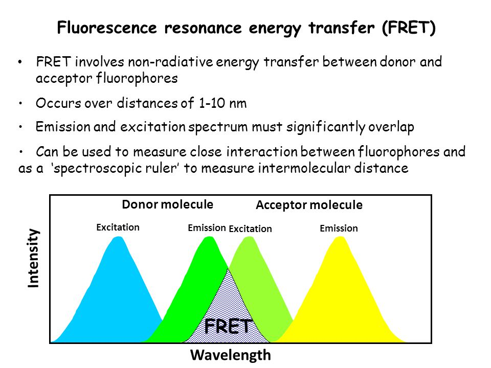 Fluorescence resonance energy transfer (FRET) FRET involves non-radiative energy transfer between donor and acceptor fluorophores Occurs over distances of 1-10 nm Emission and excitation spectrum must significantly overlap Can be used to measure close interaction between fluorophores and as a 'spectroscopic ruler' to measure intermolecular distance Donor molecule Acceptor molecule Excitation Emission Excitation Emission FRET Intensity Wavelength