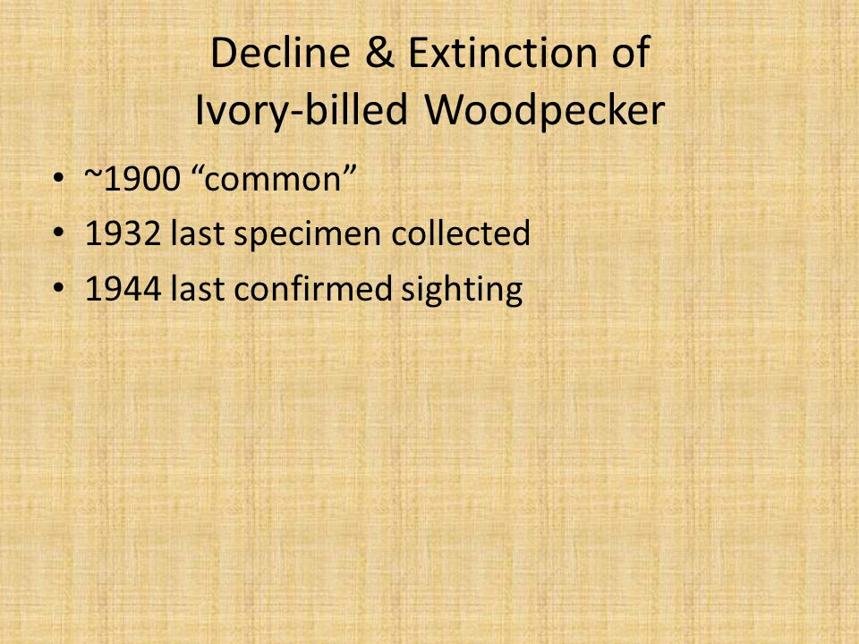 Causes of Ivory-billed Extinction Hunting Trophy collecting Habitat Loss (Scientific Collecting)