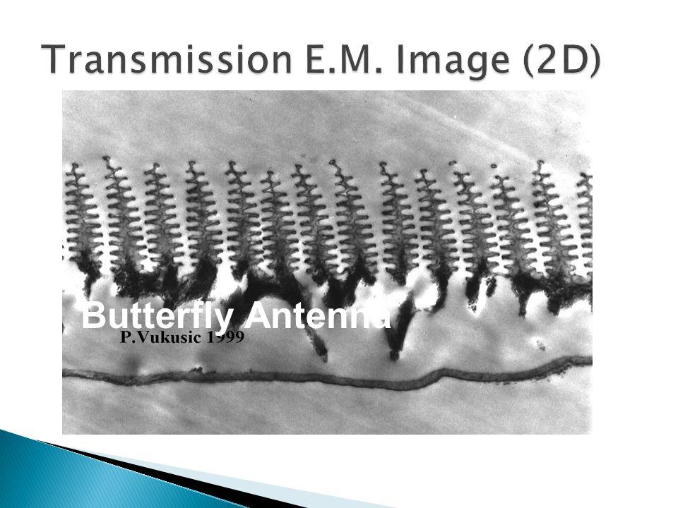 Butterfly Antenna