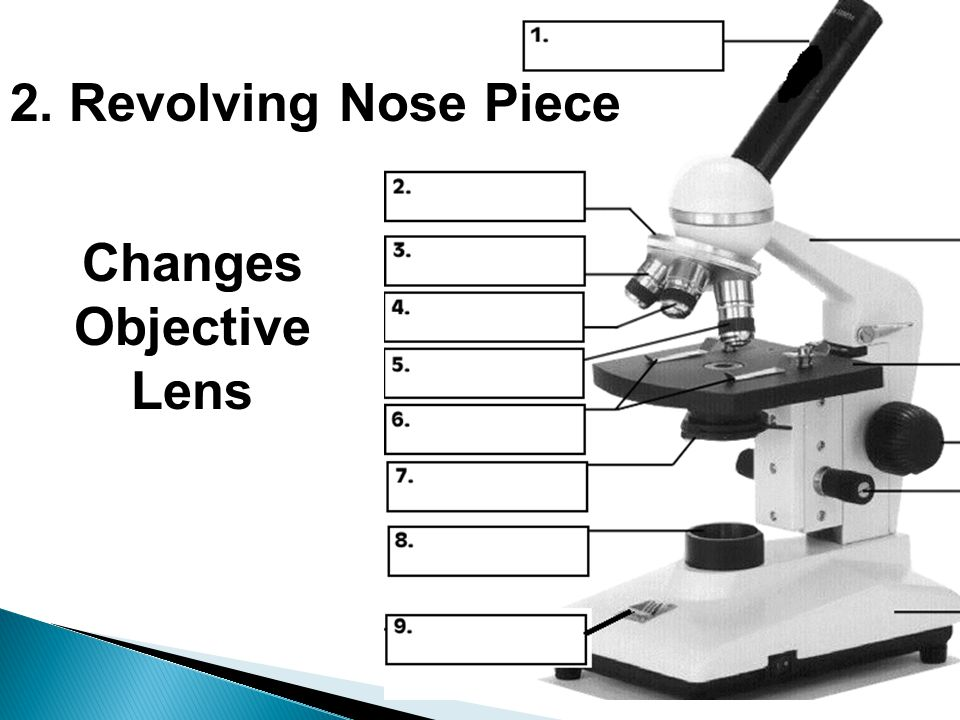2. Revolving Nose Piece Changes Objective Lens