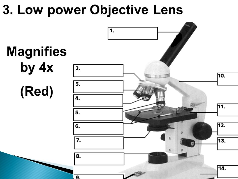 3. Low power Objective Lens Magnifies by 4x (Red)