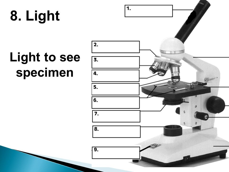 8. Light Light to see specimen