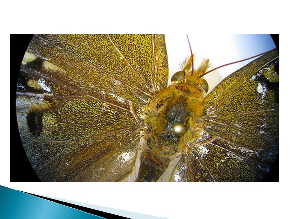 8. Light Light to see specimen