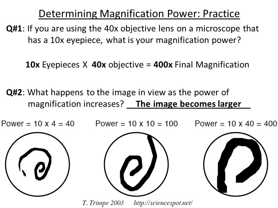 Determining Magnification Power: Practice Q#1: If you are using the 40x objective lens on a microscope that has a 10x eyepiece, what is your magnifica