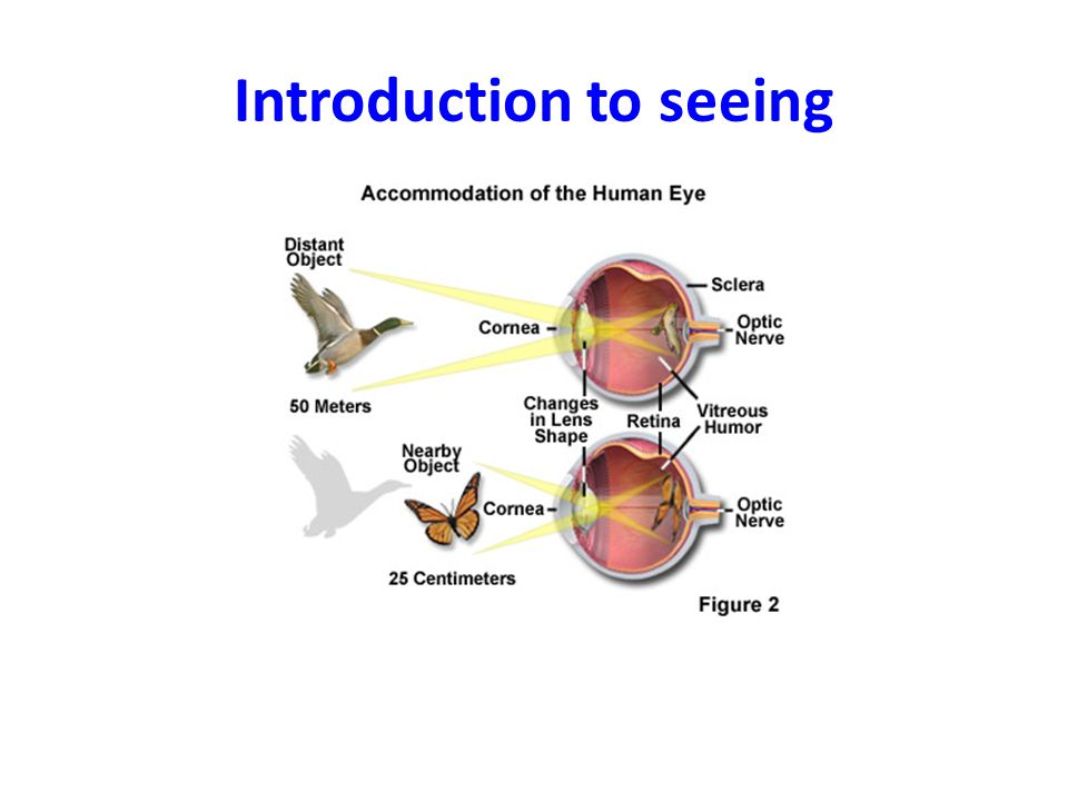 Introduction to seeing