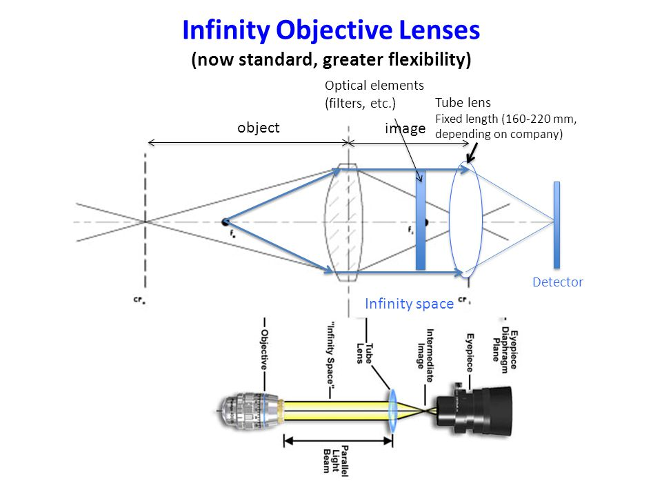 Infinity Objective Lenses (now standard, greater flexibility) Optical elements (filters, etc.) Detector Tube lens Fixed length (160-220 mm, depending on company) Infinity space object image