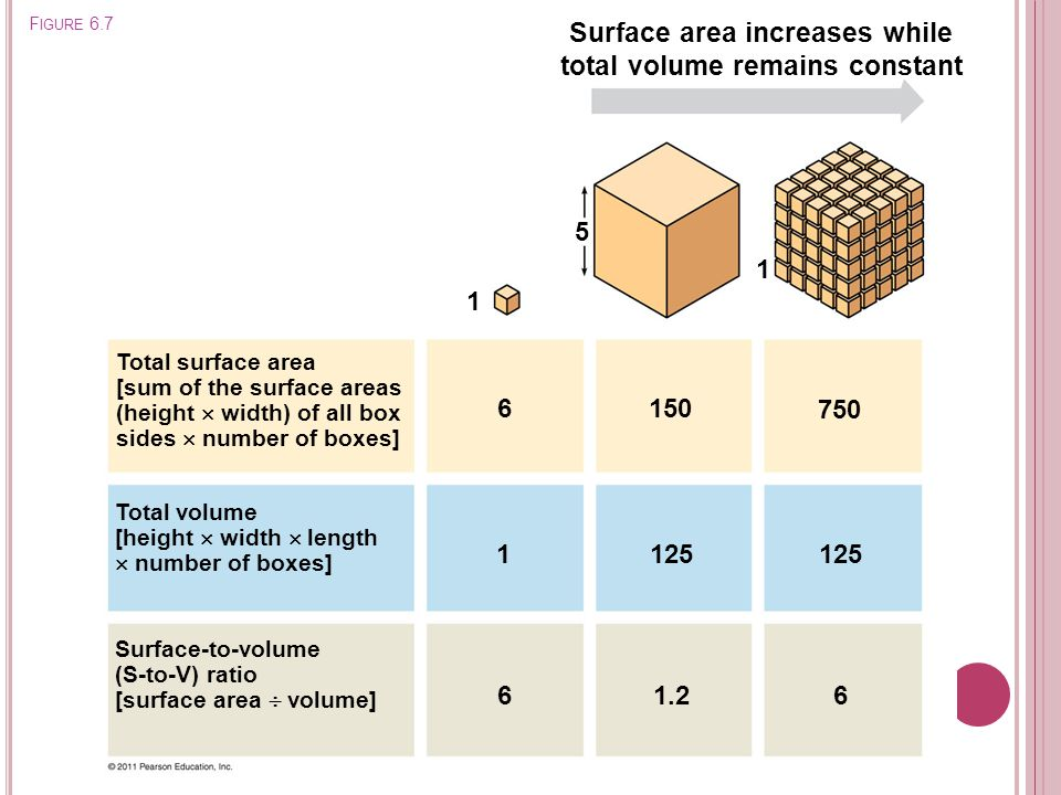 Surface area increases while total volume remains constant Total surface area [sum of the surface areas (height  width) of all box sides  number of