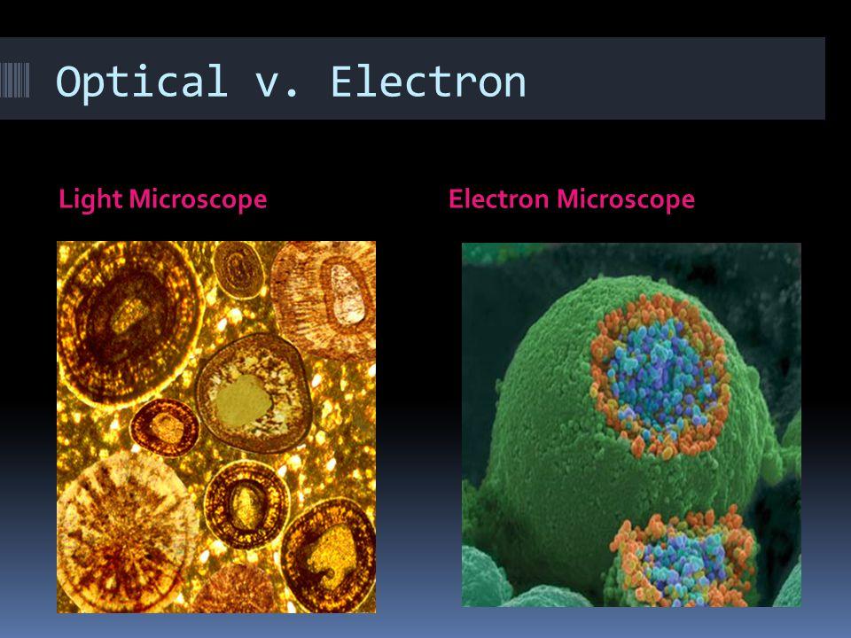 Optical v. Electron Light MicroscopeElectron Microscope
