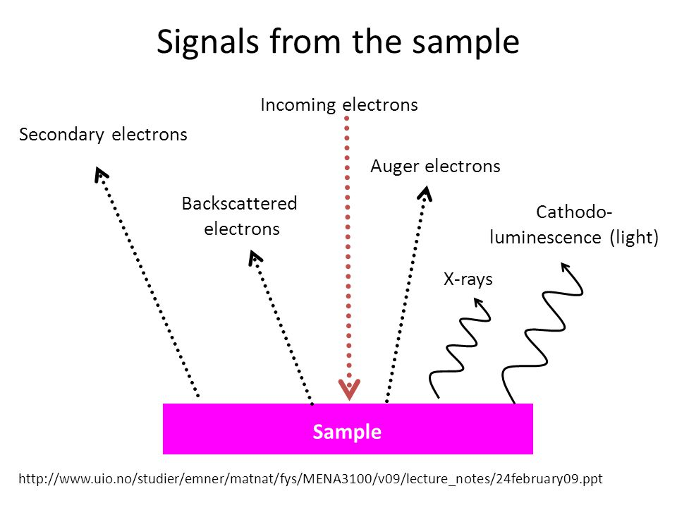 Signals from the sample Incoming electrons Secondary electrons Backscattered electrons Auger electrons X-rays Cathodo- luminescence (light) Sample htt