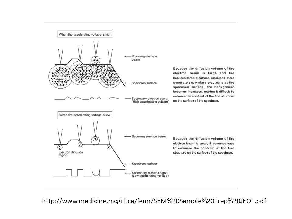 http://www.polymer.hacettepe.edu.tr/webi m/msen/undergraduate/NNT602/SEM_TEM. ppt