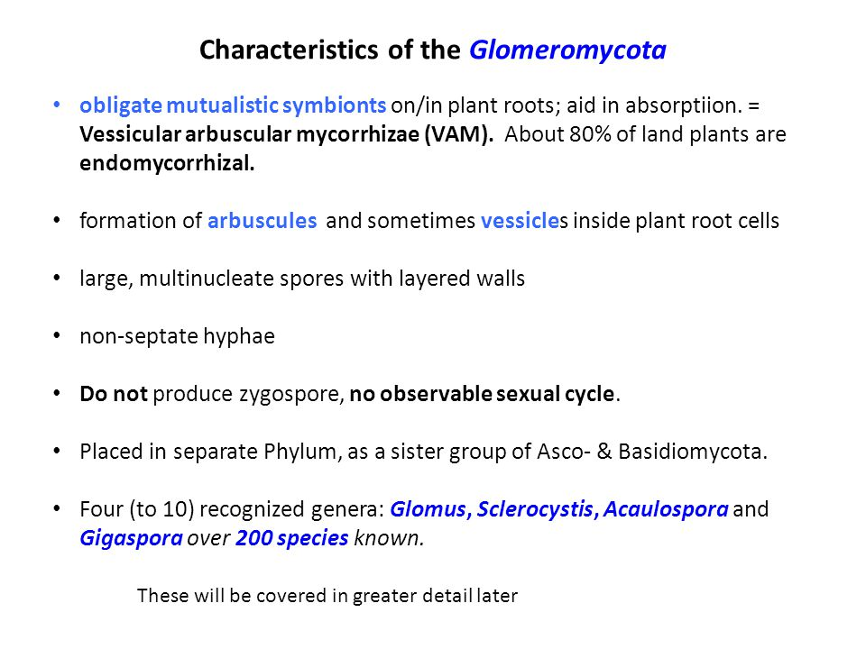 Characteristics of the Glomeromycota obligate mutualistic symbionts on/in plant roots; aid in absorptiion.