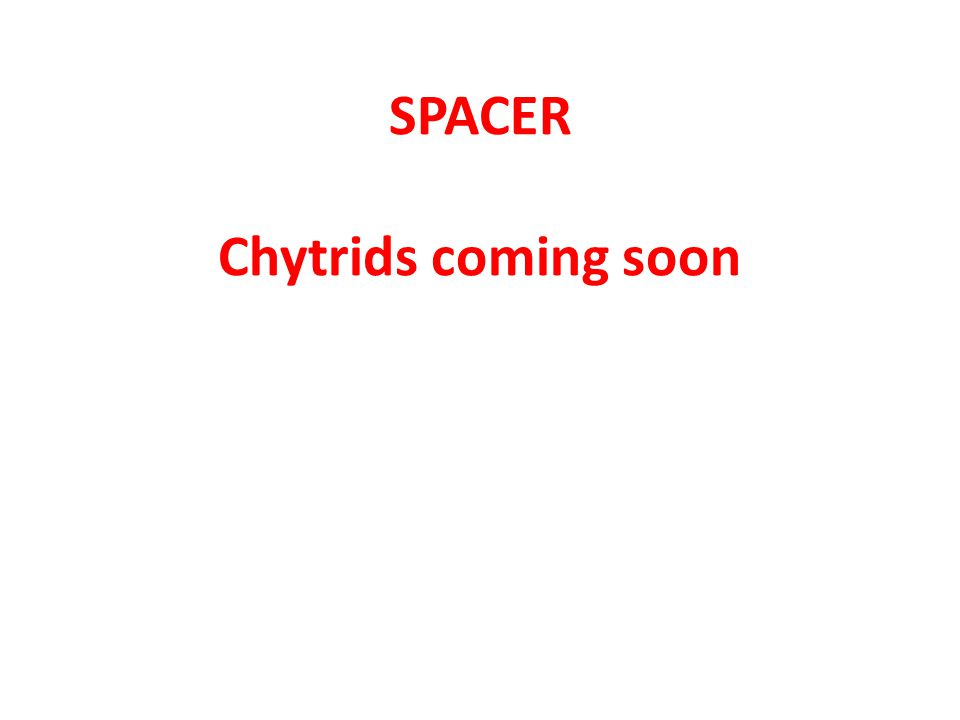 SPACER Chytrids coming soon
