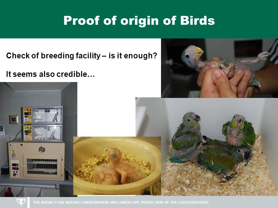 THE AGENCY FOR NATURE CONSERVATION AND LANDSCAPE PROTECTION OF THE CZECH REPUBLIC Proof of origin of Birds Check of breeding facility – is it enough.
