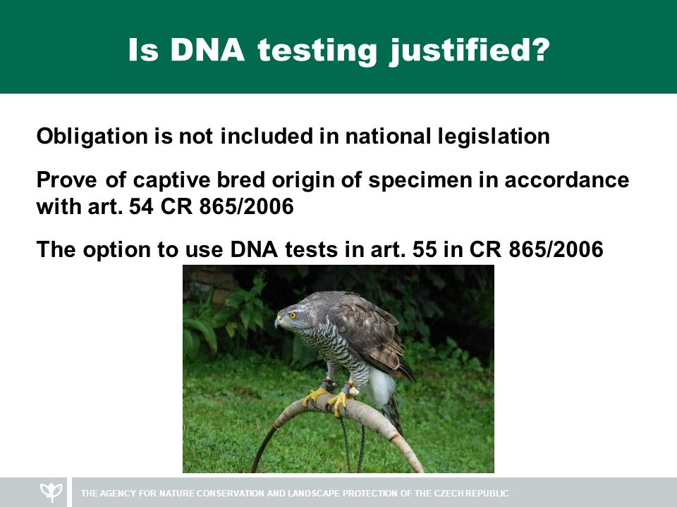 Methods of DNA testing Samples – most often blood, fresh feathers, egg shells with rest of embryonal structures, salvia samples Attendance of some CITES Authority is necessary Only results from accredited laboratories are accepted