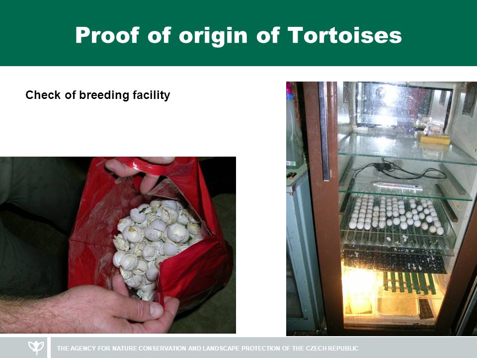 THE AGENCY FOR NATURE CONSERVATION AND LANDSCAPE PROTECTION OF THE CZECH REPUBLIC Proof of origin of Tortoises Evidences produced by breeders It seems credible