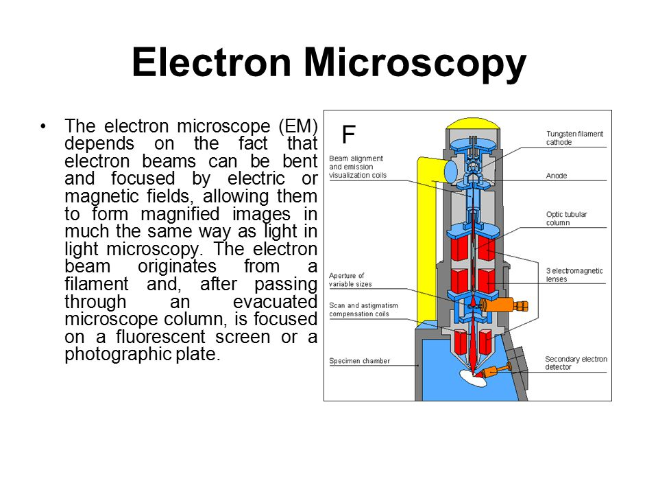 Electron Microscopy The electron microscope (EM) depends on the fact that electron beams can be bent and focused by electric or magnetic fields, allow