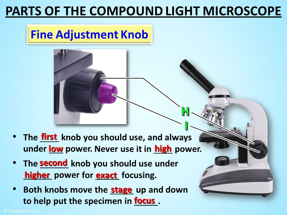 The ____ knob you should use, and always under ___ power. Never use it in ____ power. to help put the specimen in _____. Both knobs move the _____ up