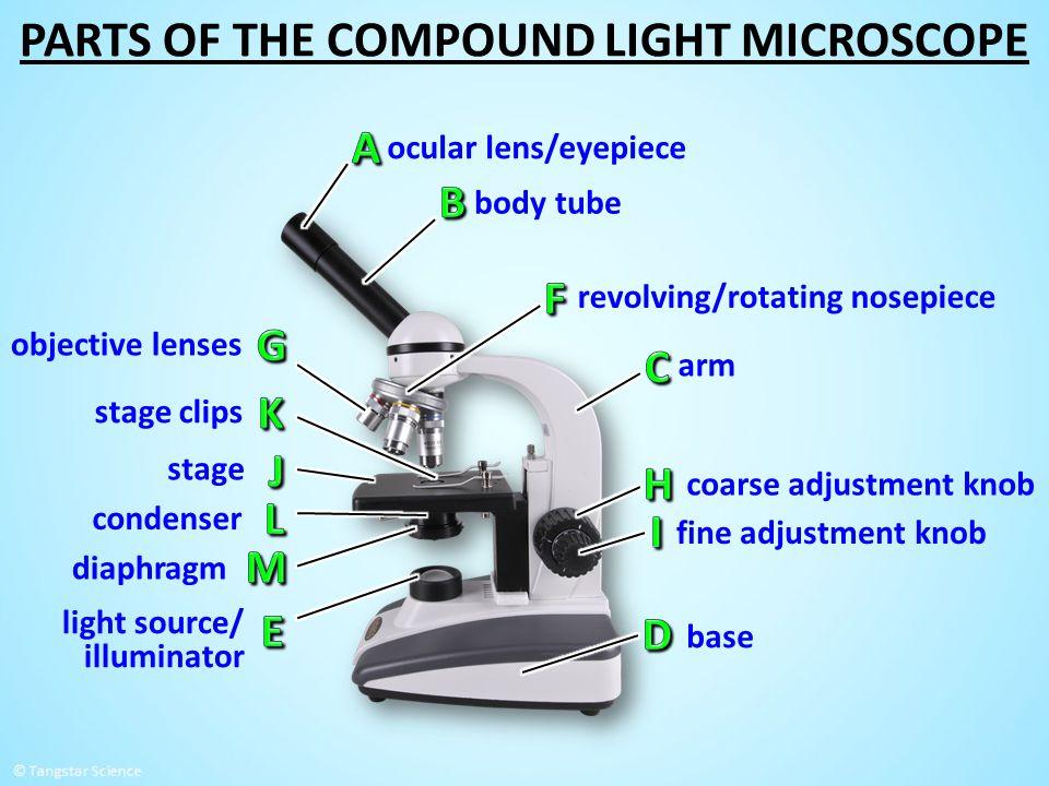 ocular lens/eyepiece objective lenses body tube base coarse adjustment knob fine adjustment knob stage stage clips diaphragm arm revolving/rotating no