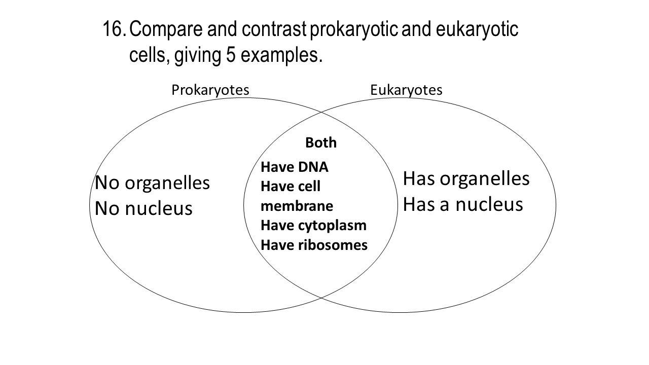 ProkaryotesEukaryotes Both 16.Compare and contrast prokaryotic and eukaryotic cells, giving 5 examples.