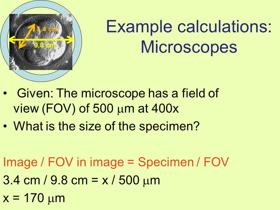 Example calculations: Microscopes Given: The microscope has a field of view (FOV) of 500  m at 400x What is the size of the specimen? Image / FOV in