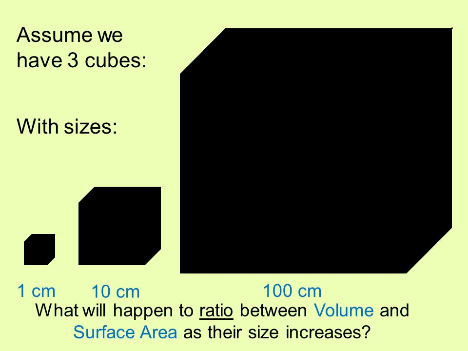 1 2 3 1 cm 10 cm 100 cm Assume we have 3 cubes: With sizes: What will happen to ratio between Volume and Surface Area as their size increases?