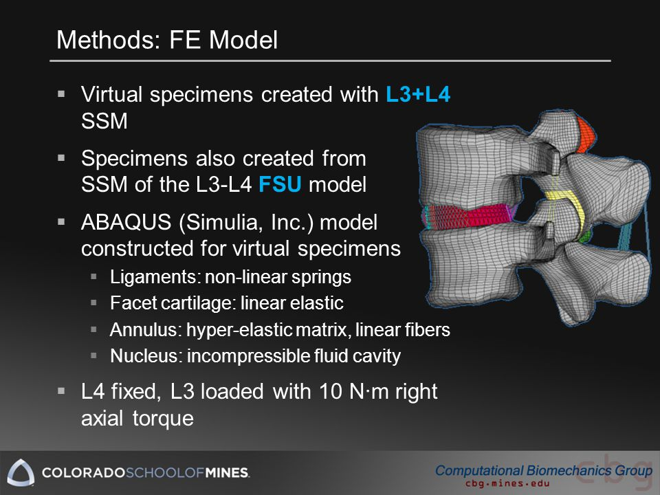 Methods: FE Model  Virtual specimens created with L3+L4 SSM  Specimens also created from SSM of the L3-L4 FSU model  ABAQUS (Simulia, Inc.) model constructed for virtual specimens  Ligaments: non-linear springs  Facet cartilage: linear elastic  Annulus: hyper-elastic matrix, linear fibers  Nucleus: incompressible fluid cavity  L4 fixed, L3 loaded with 10 N·m right axial torque