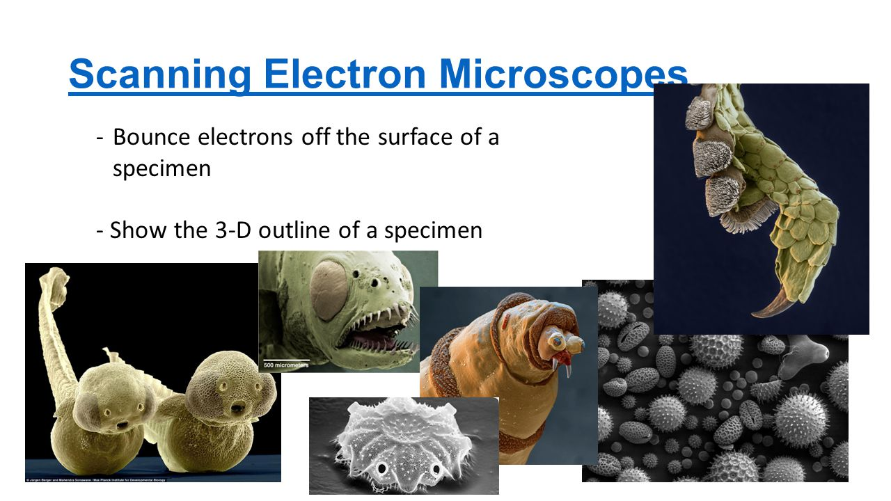 Scanning Electron Microscopes -Bounce electrons off the surface of a specimen - Show the 3-D outline of a specimen