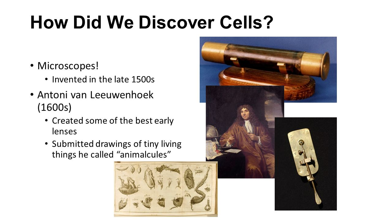 How Did We Discover Cells? Microscopes! Invented in the late 1500s Antoni van Leeuwenhoek (1600s) Created some of the best early lenses Submitted draw