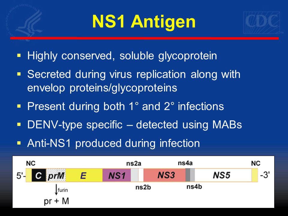 NS1 Antigen  Appears as early as day of fever onset  Present in both 1° and 2° infections  Correlated with viremia (Alcon-LePoder et al, 2007)  Possible association with disease severity (Thomas et al., 2010, Libraty et al., 2002, Dussart et al, 2006)  Single specimen diagnostic tool