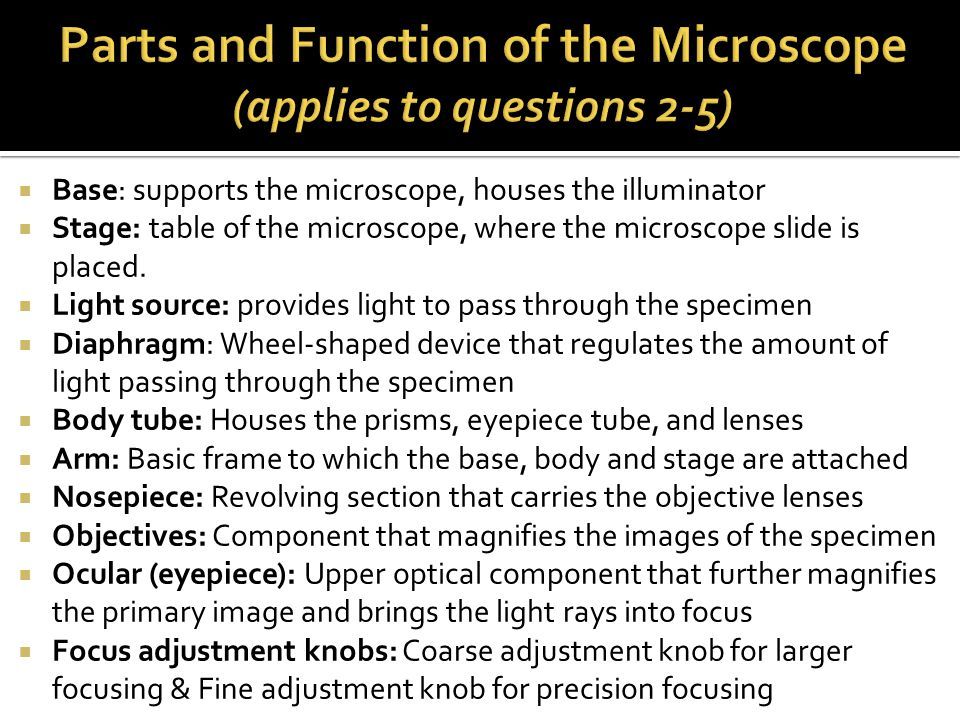  Base: supports the microscope, houses the illuminator  Stage: table of the microscope, where the microscope slide is placed.