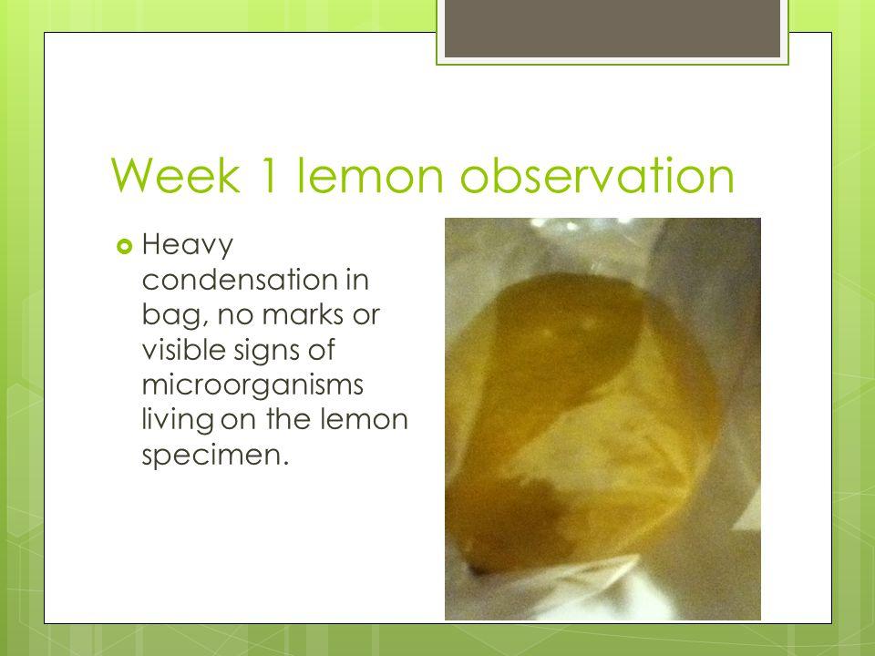 Week 1 lemon observation  Heavy condensation in bag, no marks or visible signs of microorganisms living on the lemon specimen.