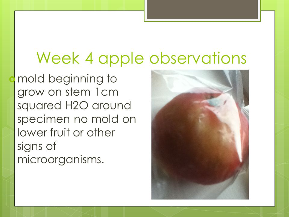 Week 4 apple observations  mold beginning to grow on stem 1cm squared H2O around specimen no mold on lower fruit or other signs of microorganisms.