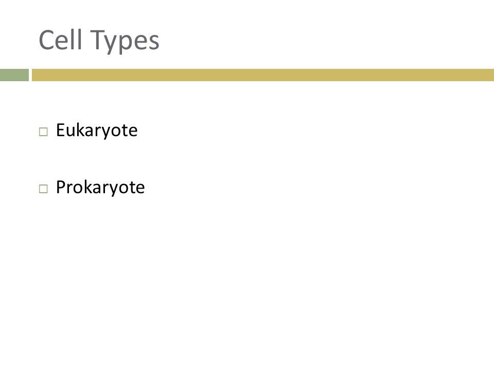 Cell Types  Eukaryote  Prokaryote