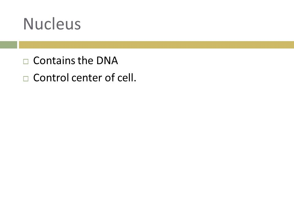 Nucleus  Contains the DNA  Control center of cell.