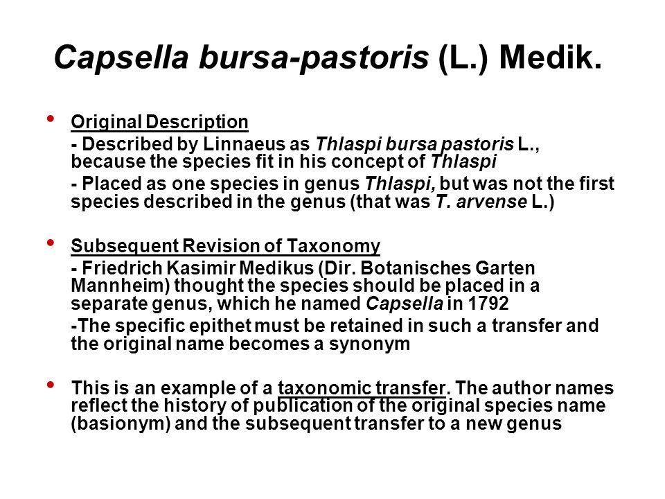 Capsella bursa-pastoris (L.) Medik. Original Description - Described by Linnaeus as Thlaspi bursa pastoris L., because the species fit in his concept