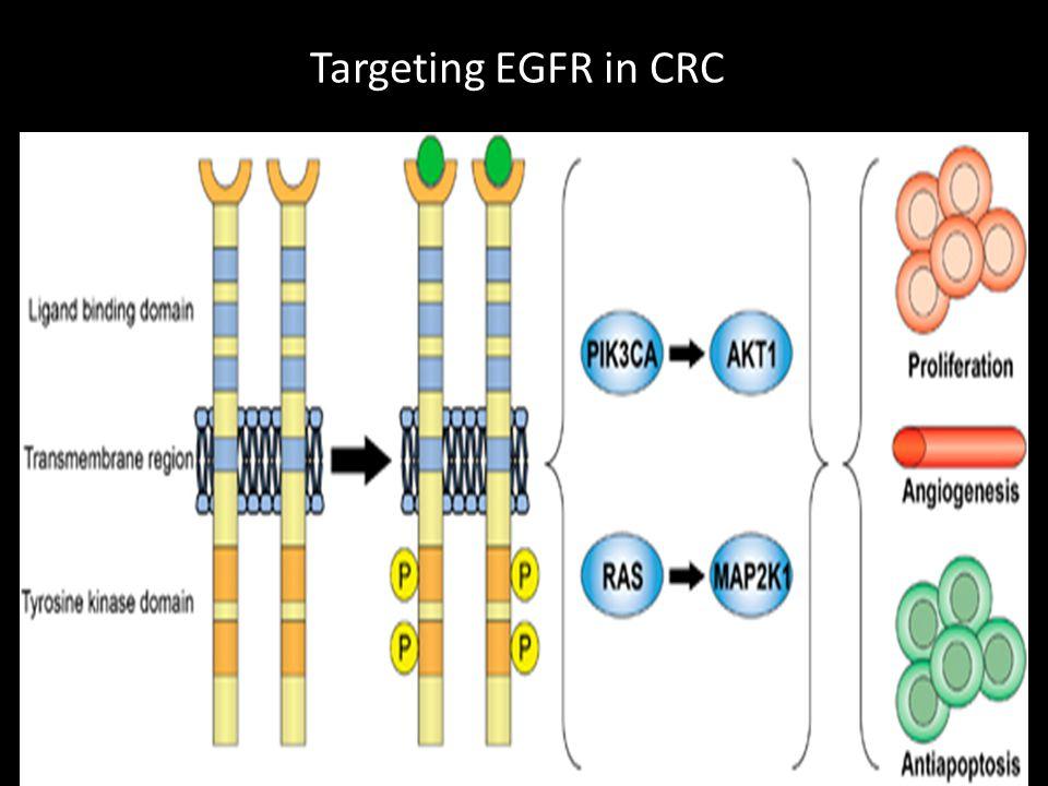 Targeting EGFR in CRC