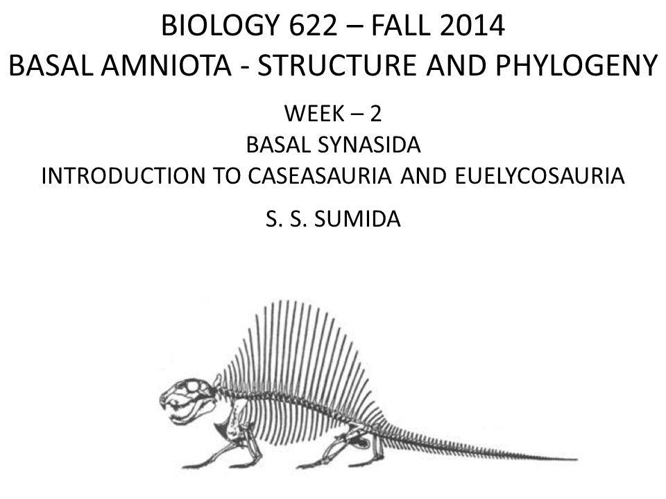 BIOLOGY 622 – FALL 2014 BASAL AMNIOTA - STRUCTURE AND PHYLOGENY WEEK – 2 BASAL SYNASIDA INTRODUCTION TO CASEASAURIA AND EUELYCOSAURIA S. S. SUMIDA