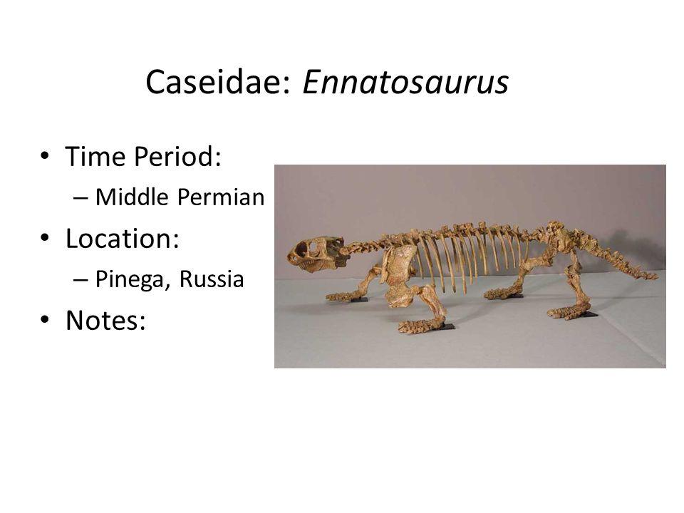 Caseidae: Ennatosaurus Time Period: – Middle Permian Location: – Pinega, Russia Notes: