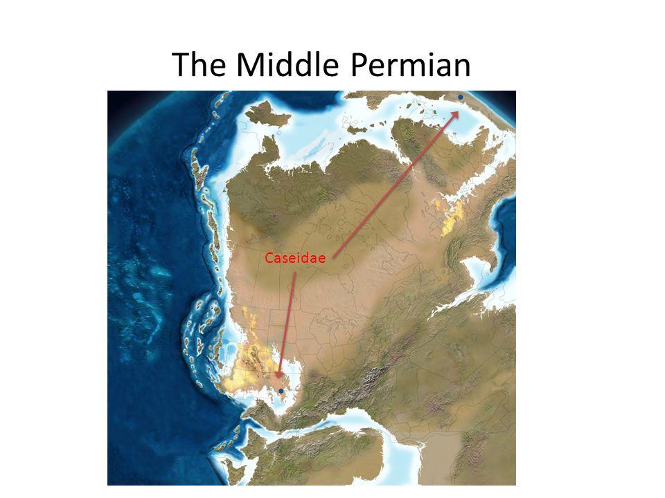 The Middle Permian Caseidae