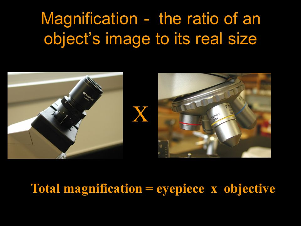 Magnification - the ratio of an object's image to its real size Total magnification = eyepiece x objective X